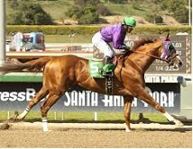 California_Chrome_2